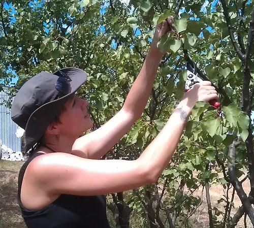Plan your pruning calendar