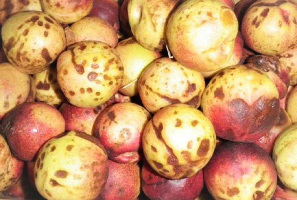 Are heritage nectarines worth the bother?