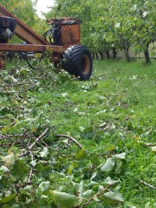 prunings on the ground