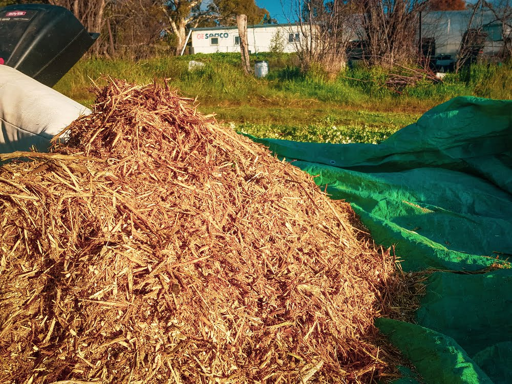 Prunings being turned into woody mulch to use in the nursery