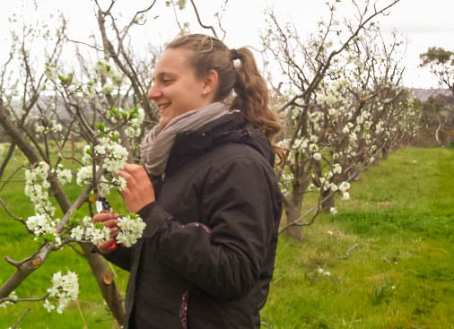 Should I prune my fruit tree in spring?