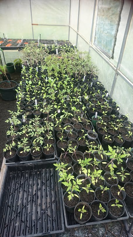 Seedlings in the hothouse