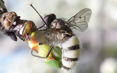 Should you be worried about insects in your fruit trees?
