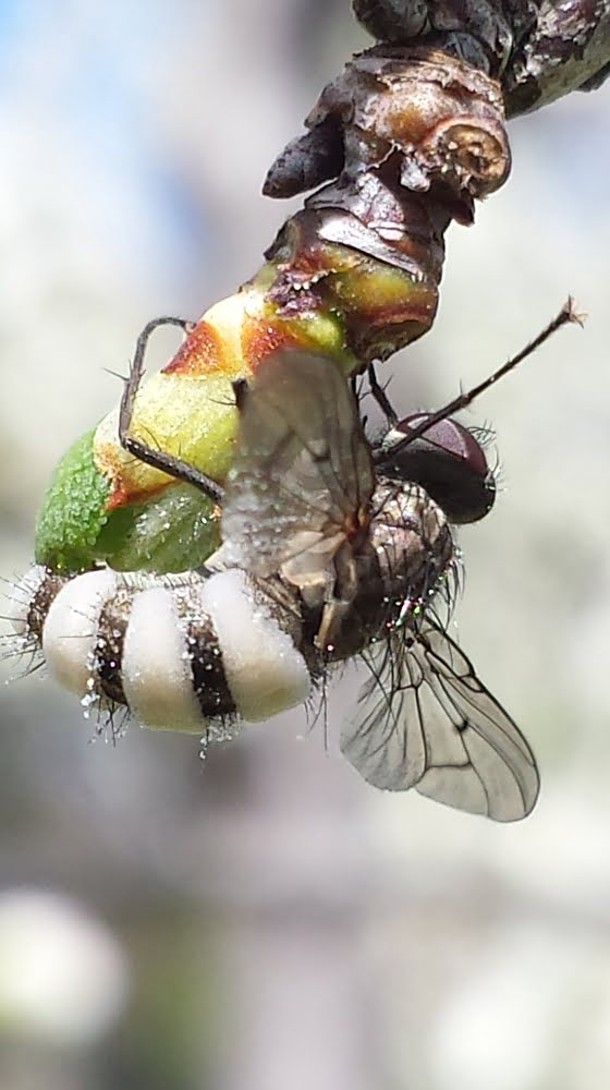 Insects in fruit trees