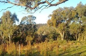 mt alexander fruit gardens in harcourt - organic audit day
