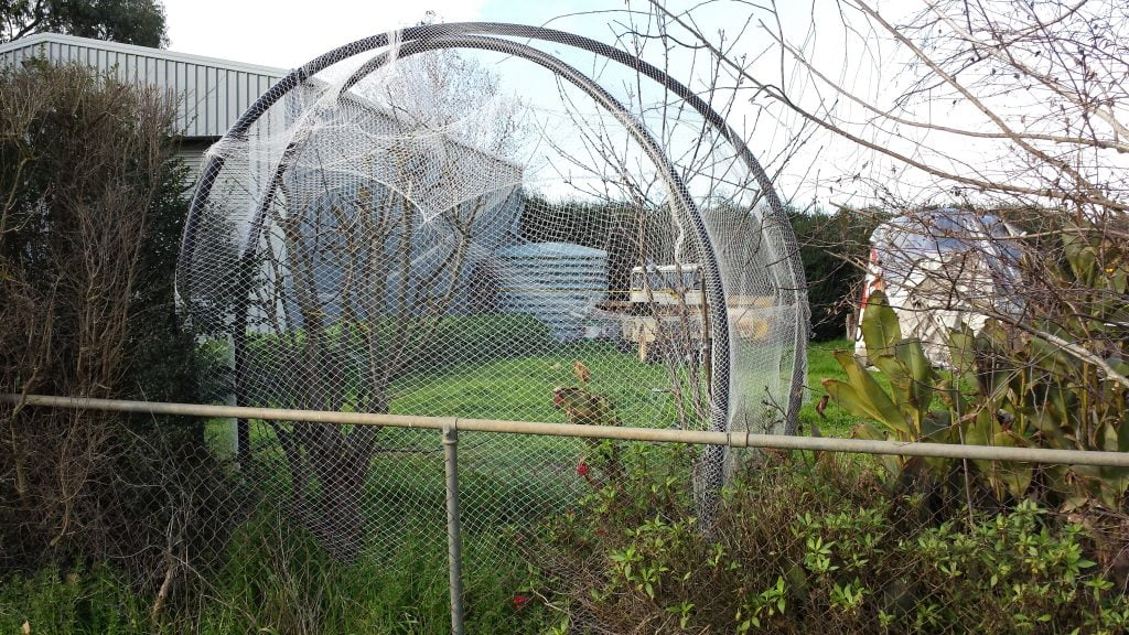 A bird netting enclosure can be re-purposed to provide frost protection