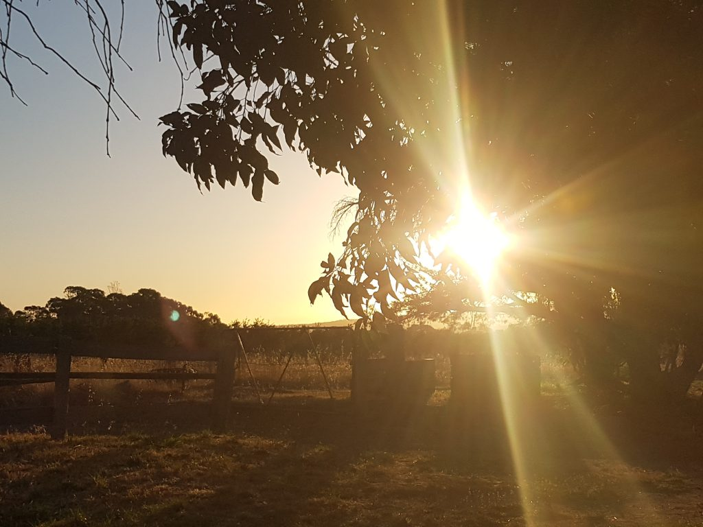The farm's starting to get that 'autumn' feel (thanks to Penny Kothe for this beautiful shot)