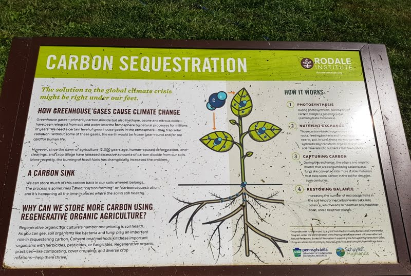 The science behind how plants take carbon from the air and store it in the soil