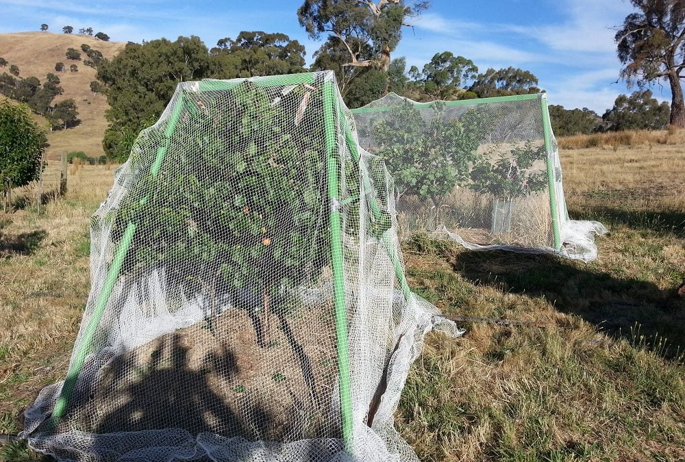 6 Steps to Looking After Nets