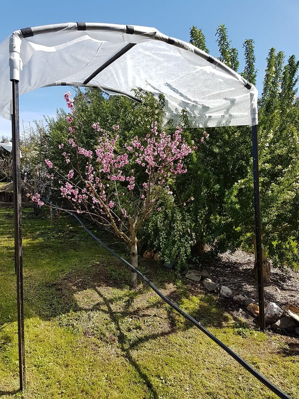 A frost shelter over a fruit tree (from Grow Great Fruit members Clare and Win's garden)