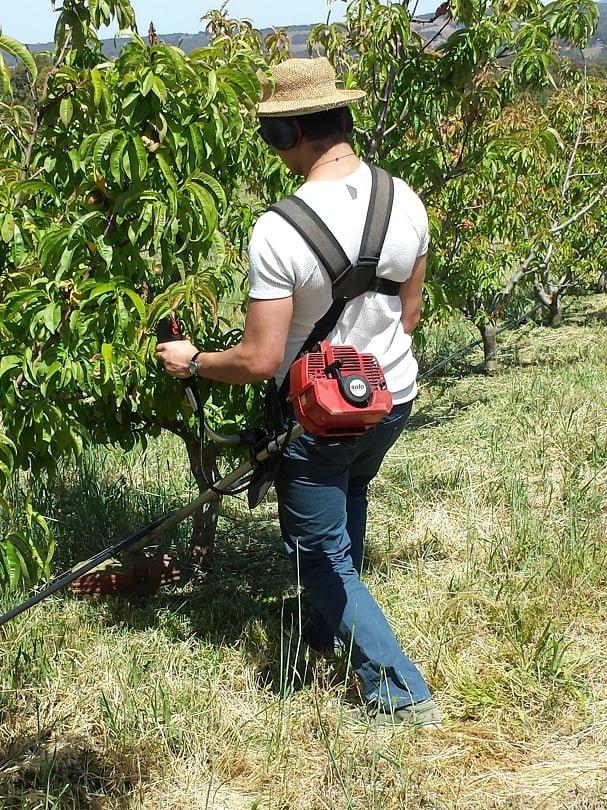 Orchard maintenance