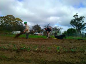 Gung hoe digging bed-490x367