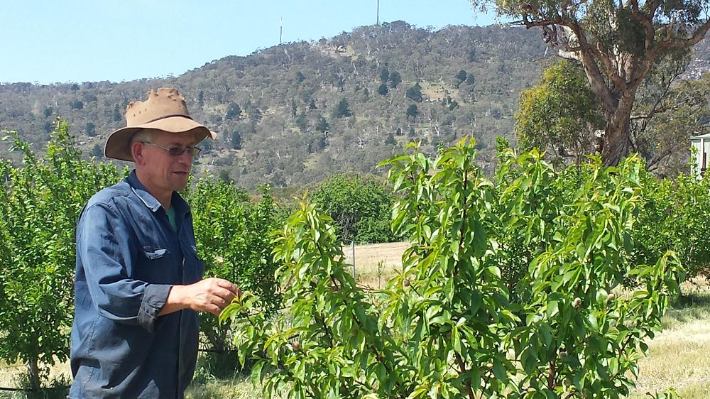 Hugh with a healthy young peach tree