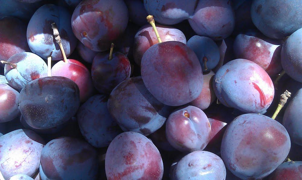 Beautiful Angelina plums