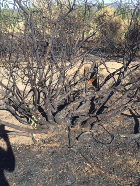 A burnt out fenceline and vegetation