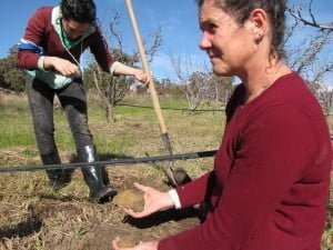Building healthy soil is key to learning how to grow fruit