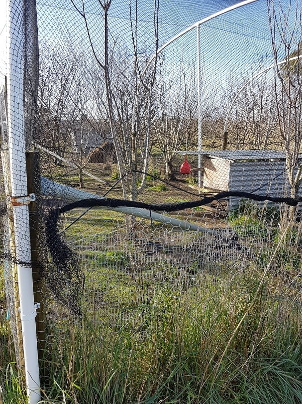 A netting enclosure over cherry trees reinforced with wire