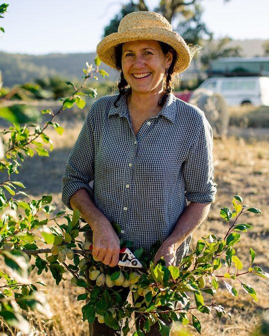 Should you prune in summer?