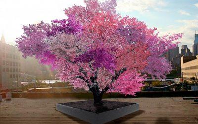 Create art in your garden with multigraft fruit trees