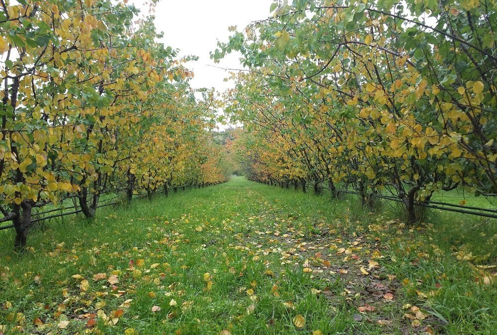 Should you spray your fruit trees in autumn?