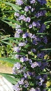 bees heronswood-270x480