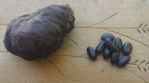 custard apple-seed-490x275