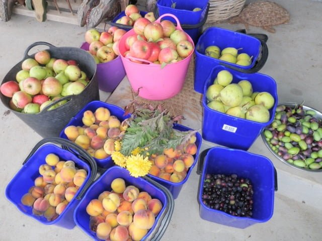 Wonderfully diverse autumn harvest from a Grow Great Fruit member's garden
