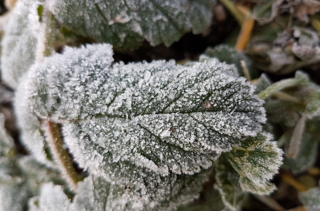 How to Provide Frost Shelter for Fruit Trees