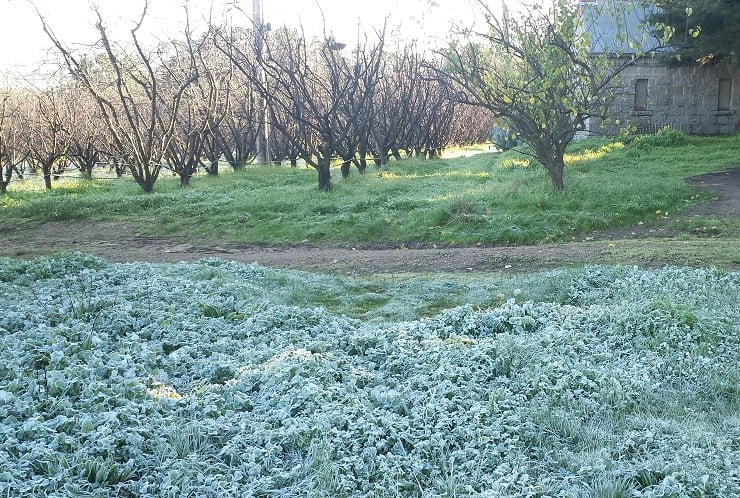 Frost management – the old way