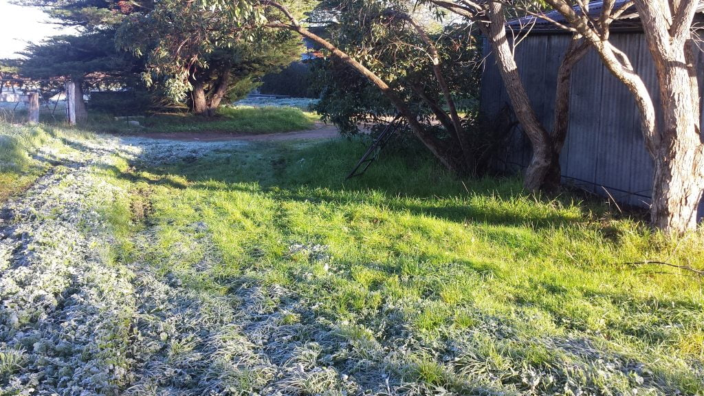 Microclimates created by big trees may be able to provide frost shelter for your fruit trees