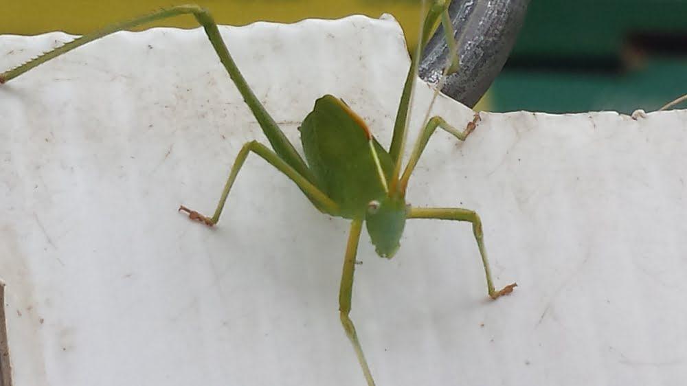 Fabulous green bug