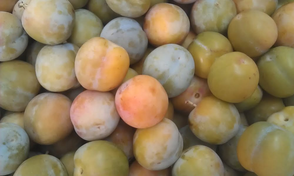 Supersweet Greengage plums - heritage variety