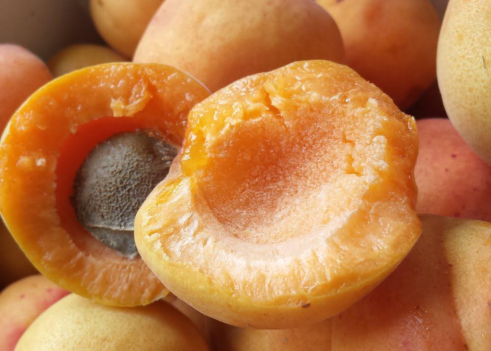 Ripe, juicy Moorpark apricots