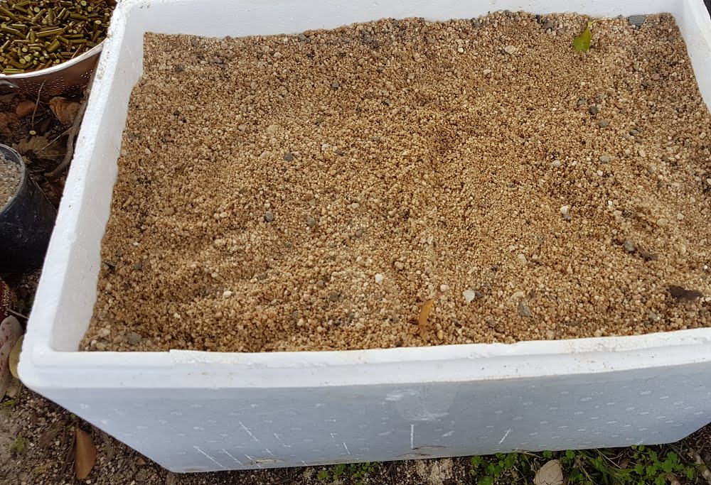 A box of sand for storing seed to grow rootstock trees