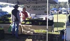 organic-stall-qld-farmers-market-295x176