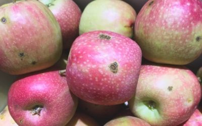 Do you need to spray your fruit trees?