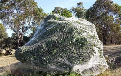 How to review and improve your fruit tree netting