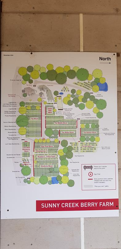 The pick-your-own farm map at Sunny Creek Berry Farm