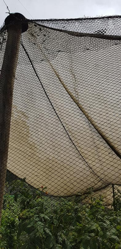 Netting and shade cloth over a berry patch