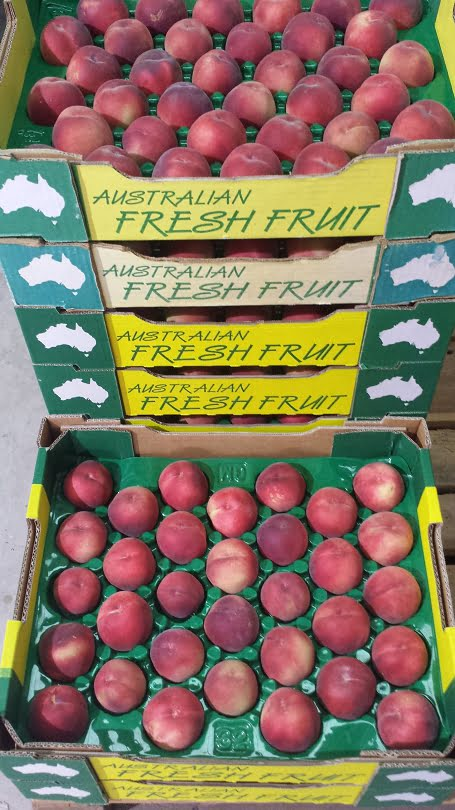 Lovely Red Briggs May peaches in the tray