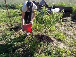 wwoofer-compost-tree-295x221