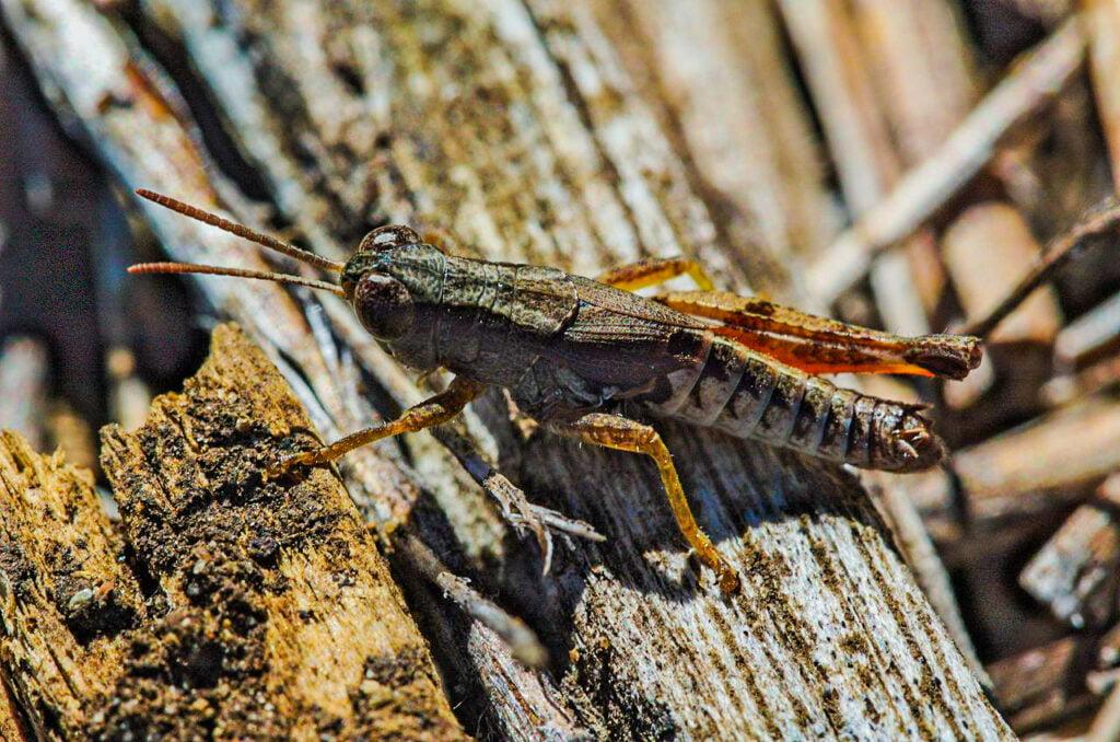 A grasshopper sitting on wood