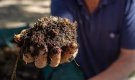 What is healthy soil?