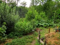 Using guilds to grow healthy trees