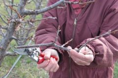 Winter pruning principles