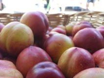 Peaches & nectarines: picking care and storage