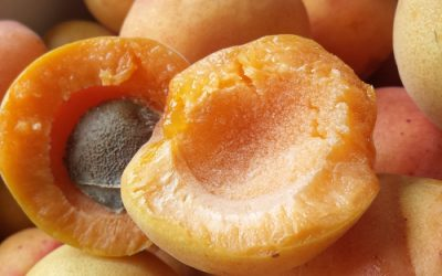 Eleven varieties of apricot trees – the pros and cons