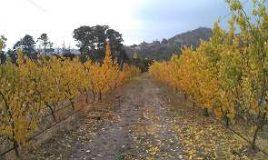 Autumn: Do my trees still need water?