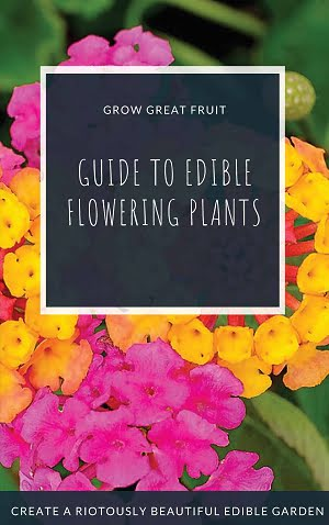 Guide to Edible Flowering Plants
