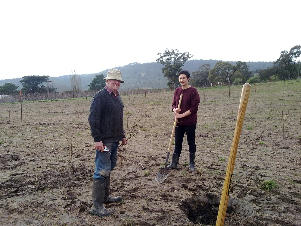 Merv and granddaughter Lucy planting trees in a new orchard